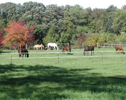 horses and fall foliage