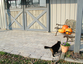 pavers, bench with pumpkins on it