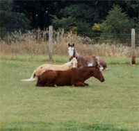 three horses laying down in pasture
